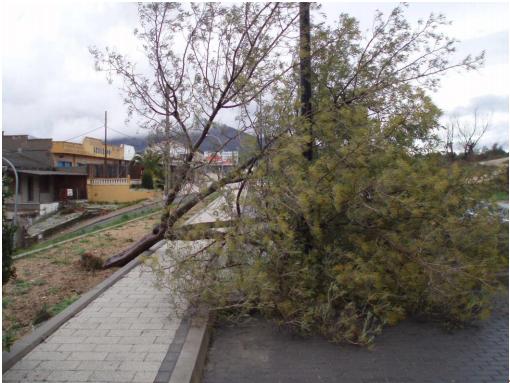 Imagen del árbol caído junto a la Carretera de Ávila